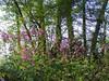 A bug's life (Daisuke Ido) Tags: flowers trees sky plants foglie alberi cielo trunks fiori piante laves tronchi