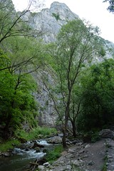 2014_Tordai_hasadk_0559 (emzepe) Tags: mountain tree rock wall creek stream canyon bach hegy transylvania transilvania fa steep schlucht kirnduls roumanie 2014 cheile patak erdly nyr rumnien kanyon ardeal jnius siebenbrgen hegysg szurdok tordai hasadk romnia turzii sziklafal tordaihasadk mszk meredek torockihegysg thorenburger mszkhasadk torocki