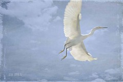 Egrets don't die,  they just fly higher. (Maria Luiza S) Tags: egret texture gara blue azul cu sky clouds nvens