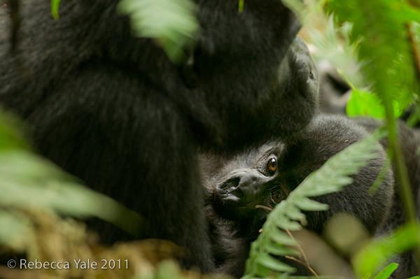 RYALE_Rwanda_Uganda_Safari-115