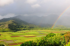 Rainbow over Hanalei Taro Fields, Kauai (John Petrick) Tags: landscape hawaii rainbow kauai hanalei hanaleivalley d90 hawaiivacation kauaihawaii kauaivacation hanaleikauai hanaleioverlook hanaleitarofields kauairainbow nikon2470mm concordians hanaleihawaii princevilleoverlook hanaleirainbow