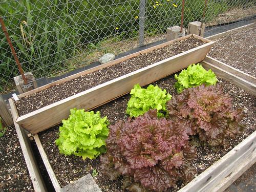 Vegetable Garden 2011