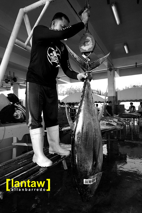 Tuna Weighing