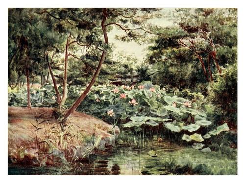 019-Pino y lotos color rosa en Kofu-Japanese gardens 1912-Walter Tyndale