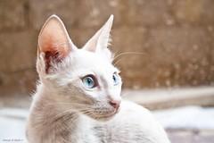 Coming from the break ;) (q8phantom) Tags: cat kuwait الكويت قطوة قطه قطة قطوه كيفان kefan