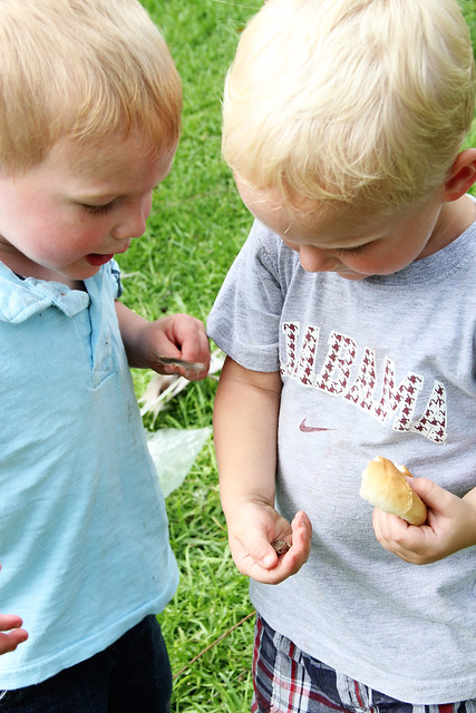 little boys and a frog