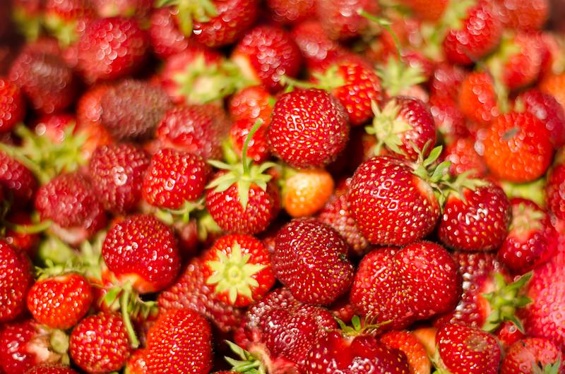 Strawberry Picking16