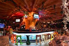 Daily Disney - Rainforest Cafe (Gary Burke.) Tags: travel vacation mushroom animals bar canon eos rebel restaurant orlando vines chair colorful legs chairs florida seat ak disney foliage disneyworld amusementpark dining fl wdw dslr waltdisneyworld stool seating stools themepark animalkingdom barstool rainforestcafe garyburke klingon65 t1i canoneosrebelt1i