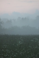 (frettir) Tags: mist fog evening sweden stockholm meadow 2230 bromma ng kvll 1030pm ngby