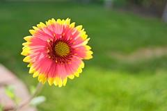 Bright (saebaryo) Tags: flower macro fuji 18mm xpro1 fujixpro1 fujinonxf18mmf20r