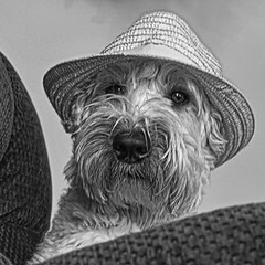 You talkin' to me? (Eric.Ray) Tags: dog white black digital canon square g12