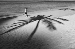 Palm Shadows (DonStevie) Tags: street leica shadow bw tree beach zeiss walking t thailand blackwhite sand couple candid 28mm rangefinder m palmtree carl monochrom ilford f28 krabi lightroom biogon zm palmshadows efex hp400 leicamonochrom