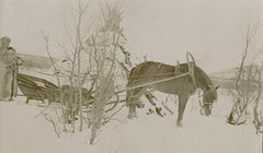 Storfjord, Skibotn (Riksantikvaren) Tags: norway vinter nor troms storfjord mennesker husdyr transportmidler hestekjrety