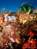 nudis en trenecito (Jaime Franch) Tags: diving formentera buceo baleares puntagavina cratenaperegrina tokinaatx107dxfisheyeaf1017mmf3545 mediterráneo visemanafotografíasubmarinaformentera