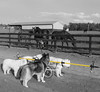 "The WooFPAK & The Horses 1 • <a style=""font-size:0.8em;"" href=""http://www.flickr.com/photos/96196263@N07/14065220319/"" target=""_blank"">View on Flickr</a>"