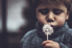 Spring wind will bring (ErlandG) Tags: boy portrait flower childhood norway season spring child wind dandelion