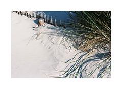Leaves (Punkroyaltiger) Tags: france film beach analog 35mm sand nikon kodak bordeaux portra400