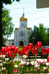 Ivanovo best cherch (alexiv37_400d) Tags: uk flowers trees girls sky guy tower water smile grass station vancouver temple puppies shrine downtown neon chinatown shropshire tank power tulips dolphin soccer flash great joy handsome kittens center drop ironbridge dewdrop foliage sing brides gorge mollusks cooling sexi inflorescence peo cherch ivanovo explored  dlfkgjh