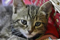 Zorba il gatto ($IMONE RAVERA PHOTO) Tags: cat simone gatti zorba ravera ringexcellence