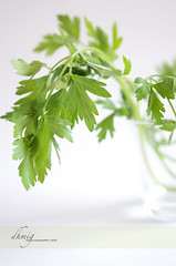 Fresh parsley (dhmig) Tags: stilllife food white green nature nikon dof bokeh naturallight simplicity parsley freshness ingredient 50mmf28 nikond7000 dhmig dhmigphotography