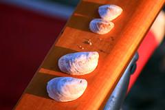 180-365 29June2011 SeaShells (K-O-M) Tags: beach seashells seaside odc2