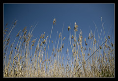 verso il cielo @Oasi Simeto (brunombo) Tags: blue sky italy nature high italia pentax outdoor blu natura oasis cielo sicily tamron alto azzurro catania sicilia oasi aperto simeto oasidelsimeto tamronaf18250mmf3563diiildasphericalifmacro justpentax