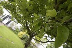 LittleApples (Tony Tooth) Tags: tree apple garden nikon buckinghamshire wideangle tamron bucks 10mm d7100 1024mm steepleclaydon
