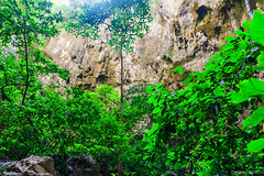 tree (chok_moso) Tags: wood wild cliff plant tree green nature leaves forest leaf bush woods hole wildlife foliage arbor jungle trunk cavity verdant cave vernal canister cavern stalk precipice sanctum arbour bole haulm verdurous