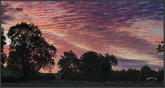 Sky Ripples. (Picture post.) Tags: landscape nature green sunrise clouds trees mackerel sky paysage arbre interestingness morning summertime