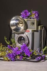 Howell_SHL_3_10_16(Hard) (Willow R. Howell Photography) Tags: hlight hardandsoftlight hardlight light lighting softlight kodak camera flashmate 20 flower purple flowerspurple green old