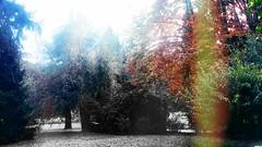 (Maria Cristina Talarico) Tags: mariacristinatalarico misteryhouse wood autumn houseinthewood colors