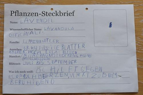 Lavendel-Steckbrief