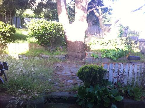 Backyard - before work starts