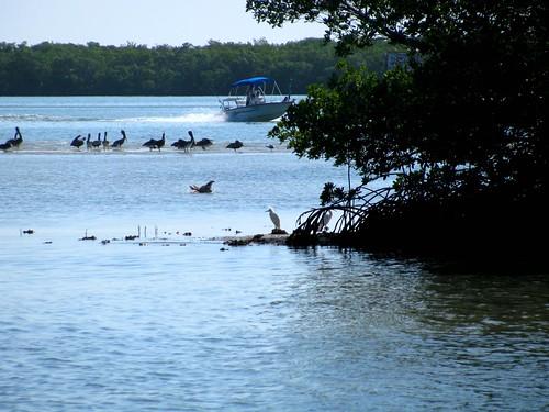 IMG_5689-Estero-Bay-sand-bar