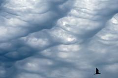Bird (Bozze) Tags: clouds moln wwwoppnahorisonterse wwwopenhorizonsfinearteu donsöjuni2011 wwwdonsobilderse