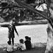 Lyon - parc de la Tête d'Or - Sur un arbre perché ...