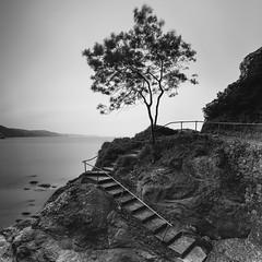 Steps (Martin Mattocks (mjm383)) Tags: longexposure blackandwhite seascape tree water square mono landscapes rocks cornwall steps devon canoneos5dmarkii mjm383 martinmattocksphotography