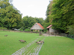 IMG_5298 (jaglazier) Tags: 2016 91416 animals architecture barns bielefeld bielefeldzoo birds buildings canadageese copyright2016jamesaglazier deciduoustrees fences germany grass grazing meadows pastures plants poles september teutoburg teutoburgforest teutoburgerwald trees woodenbuildings woodenfences zoos fields geese landscapes parks railfences