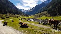 Harbachtal  Wanderung  Salzburgerland September 2016_web (72 von 97) (WIEDERUNTERWEGS.com) Tags: 2016 salzburgerland hohe tauern wandern wanderhotels umweltzeichen lebensministerium