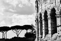 Rom Coloseum 2 b&w (rainerneumann831) Tags: blackwhite coloseum rom zypressen
