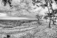 Painterly (tariq ante) Tags: road trees sea bw clouds landscape dramatic dry fisheye hdr samyang