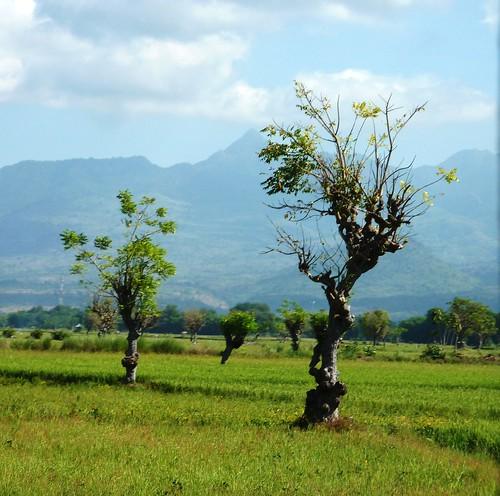 Sumbawa 4-Plage de Lakey (20)