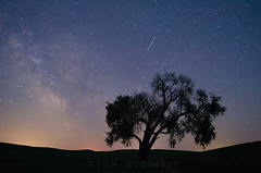Milky Way, Lone Tree and Shooting Stars over the Palouse (Ryan McGinty) Tags: nightphotography stars astrophotography cottonwood shootingstars lonetree milkyway palouse sigma20mmf18 ryanmcginty d5100