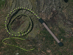 3colorAllwhip (miwhipscom) Tags: fall three cracker toned nylon bullwhip cracking braiding plaiting parachord miwhipsdotcom