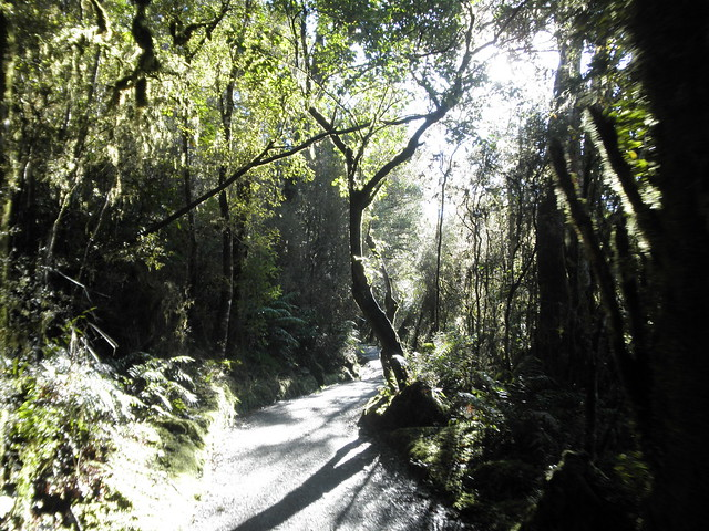 Lake Matheson Trail
