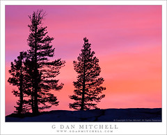 Trees and Sunset Sky, Olmsted Point (G Dan Mitchell) Tags: california road park travel trees sunset red sky orange usa mountain 120 nature silhouette june pine clouds point landscape evening three highway colorful branch purple bright dusk nevada stock pass grow scenic sierra national yosemite dome granite northamerica opening range slab tamarack olmsted tioga lodgepole