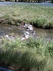 Egret! (Ealasaid) Tags: creek egret permanentecreek