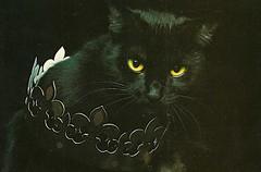 Photo Bruno Maso (Decoupage girl) Tags: black cat crown