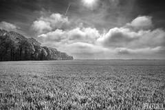 Somme Landscape - High Wood (Nick J Stone) Tags: highwood somme 4379