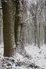 ckuchem-1659 (christine_kuchem) Tags: baumrinde buche bume eiche eis frost hainbuche natur pfad pflanzen ruhe samen spuren stille struktur wald weg wildpflanzen winter einsam kalt schnee ste